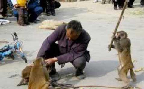 scimmietta con bastone picchia il padrone