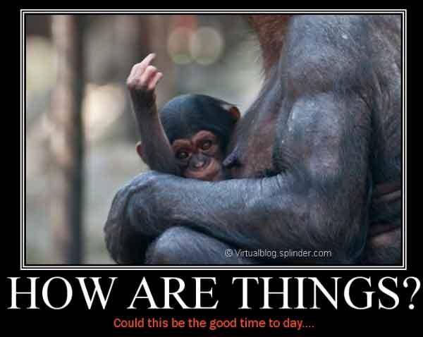 scimmietta dito