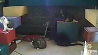 Attraverso la magia della robotica e Internet, le persone, in tempo reale, possono giocare a distanza con i gatti che si trovano in due rifugi per gli animali La gente ama gli animali domestici. Alcuni studi hanno stabilito che accarezzare un animale può abbassare la pressione sanguigna di una persona. […]