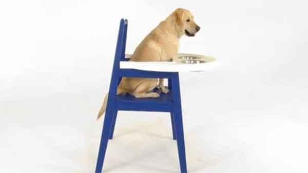Ikea Hundstol seggiolone per cani