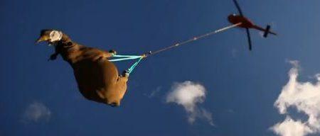 Rinoceronti volanti per sfuggire al bracconaggio (video)