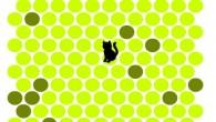 Chi mi aiuta a catturare il gatto? Ciò è abbastanza difficile ma può essere fatto. L'idea è di impedire al gatto di raggiungere i bordi esterni dell'area di gioco per non farlo scappare fuori. Per iniziare il gioco, cliccare sui cerchietti verde chiaro (il gatto inizia a spostarsi), con la […]