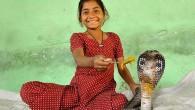 L'India è stata a lungo conosciuta come la terra degli incantatori dei serpenti Ecco qualcosa di molto insolito, Kajol Khan, bambina indiana di otto anni, tutto il giorno non gioca con altre bambine, preferisce giocare i suoi amici cobra. Kajol Khan vive nel villaggio indiano di Ghatampur, insieme ai suoi […]