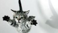 L'altra sera, ho visto un video di YouTube con una donna in piedi sul suo letto, con in mano un gatto capovolto, fatto cadere più volte sul materasso. Il gatto, sorprendentemente, ogni volta che è stato lasciato cadere, immediatamente si è raddrizzato per atterrare in piedi (vedi video). La donna […]