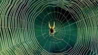 Xinwei Wang, professore d'ingegneria meccanica, studia la conducibilità termica, la capacità dei materiali di condurre il calore. Ha scoperto che la seta di ragno, oltre ad essere molto forte, molto elastica, solo 4 micron di spessore (il capello umano è di circa 60 micron) è un ottimo conduttore di calore. […]