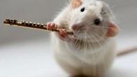 In giro non c'è il Pifferaio di Hamelin, i ratti sono una minaccia e devono essere affrontati. Idan Shapira, ricercatore di biologia alla Massey University di Albany, in Auckland (Nuova Zelanda), ha messo a punto un nuovo metodo per combattere la popolazione dei ratti che infestano i parchi regionali di […]