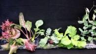 La Nasa, guardando al 2030, ha iniziato a sviluppare un prototipo di una serra per coltivare gli ortaggi nello spazio, per fornire cibo fresco agli astronauti in missione verso il pianeta rosso. Il programma chiamato Veggie si sta sviluppando nel deserto dell'Arizona, in una serra dotata di lampade a Led, […]