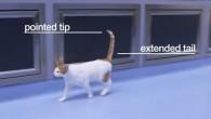 Nicky Trevorrow esperta del comportamento animale, lavora con la Protezione gatti, ha collaborato per la produzione di una guida per aiutare i proprietari di animali a capire i loro gatti. La guida contribuisce a spiegare il comportamento spesso contraddittorio di questi preziosi animali, come il motivo per cui possono regalare […]
