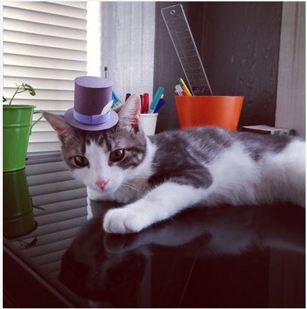 Gatti con cappelli