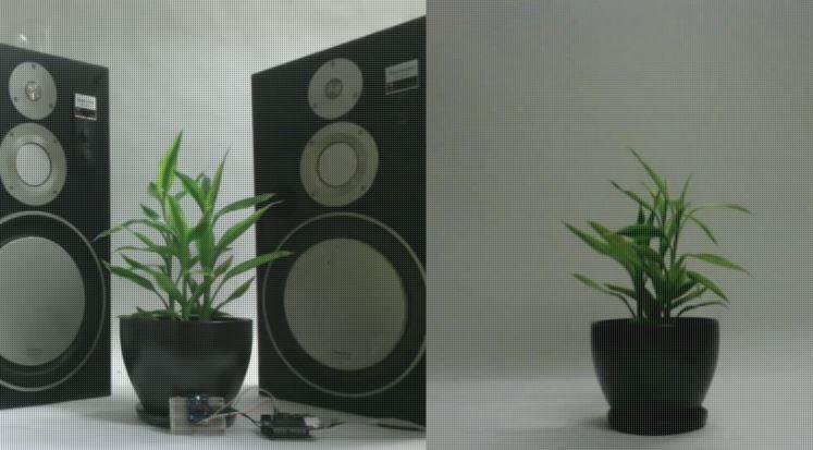 Parla con una Pianta - Talk to a plant esperimento twitter clicca per mandare un messaggio