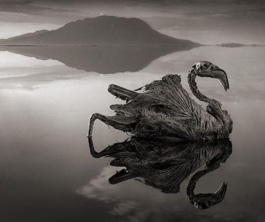 Uccelli calcificati - foto di  Nick Brandt. Clicca per vedere altre foto