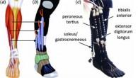 Gli ingegneri invece di un esoscheletro rigido hanno sviluppato il dispositivo plantare attivo utilizzando plastiche morbide e materiali compositi. I materiali morbidi, combinati con muscoli pneumatici artificiali (PAM), sensori leggeri e software di controllo avanzato, hanno reso possibile per il dispositivo robotico ottenere movimenti naturali della caviglia (vedi video). Yong-Lae […]