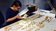 Gli archeologi hanno trovato uno scheletro di 3.200 anni di un uomo con una forma diffusa di cancro, hanno detto che finora è il più antico esempio di una malattia che spesso è associata a stili di vita moderni. I resti di un uomo che si ritiene essere di età […]