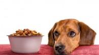 Alcune regole utili per stabilire un buon rituale del pasto sono: 1. il cibo non si ottiene con la forza, ma aspettando con calma il proprio turno; 2. nessuno tenterà di sottrarre il cibo all'altro, cioè una volta servito il pasto, bisogna lasciare che il cane mangi in tranquillità senza […]