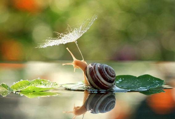 Il magico mondo delle lumache - foto di Vyacheslav Mishchenko