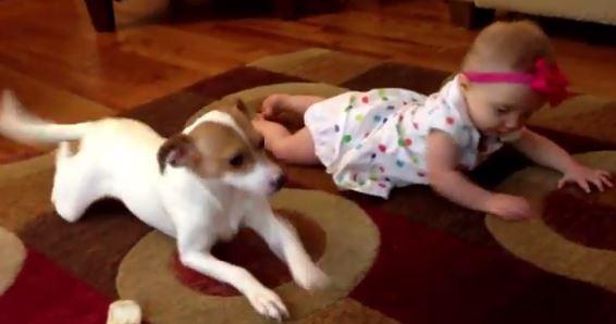 Il cane Buddy insegna alla piccola Allie a gattonare