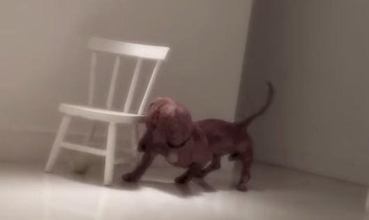 Frank il cane che scodinzola nel sonno