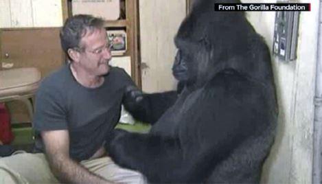 Robin Williams e il gorilla femmina Koko
