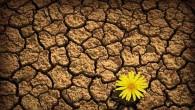 """Milioni di californiani stanno per essere colpiti da un rigoroso razionamento dell'acqua – il numero giornaliero di """"assegnazione"""" rappresenta la quantità massima di acqua che è permesso utilizzare per qualsiasi scopo. Le famiglie che superano il limite di assegnazioneper ogni violazione dovranno affrontare multe salate di centinaia di dollari. Il […]"""