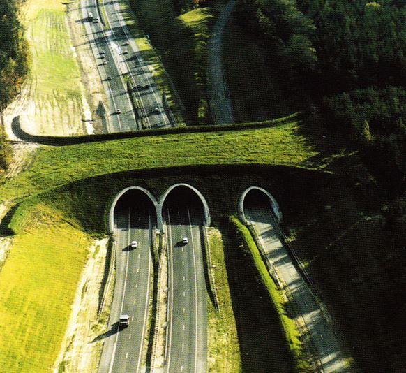 8) Animal Crossing Bridge, Paesi Bassi