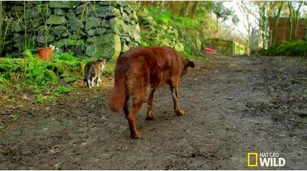 Trevel cane non vedente a passeggio guidato da Pudditat il suo amico gatto