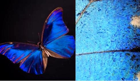 occhi colore blu farfalla illusione ottica