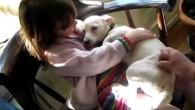 Se non hai mai avuto bisogno della prova che gli animali possono sentire e mostrare amore, questo video rivelerà che si tratta di una manifestazione ben definita. Nel video, una bellissima e amorevole cucciola chiamata Annie, sta mostrando una quantità incredibile di gratitudine dopo essere stata salvata da un rifugio […]