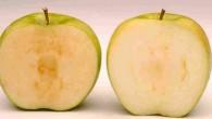 """Okanagan Specialty Fruits, una piccola azienda canadese, per anni ha sollecitato la commercializzazione della sua """"mela Arctic"""", non imbrunisce dopo essere stata spellata, tagliata o addentata. Il Dipartimento dell'Agricoltura degli Stati Uniti (USDA), questa settimana ha dato l'approvazione, è certo che prima di vedere eventuali mele Arctic al supermercato, non […]"""