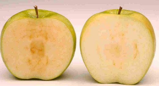 Okanagan Specialty Fruits, mela che non si ossida