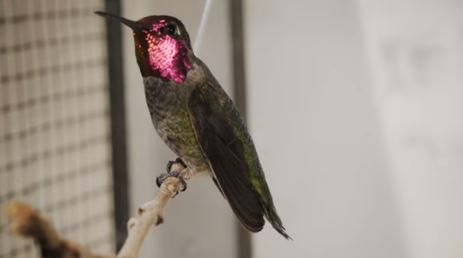 colibrì galleria del vento