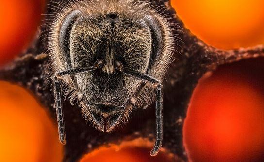 Anand Varma primi 21 giorni di vita dell'ape