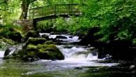 Sotto una passerella di legno sul fiume Bonet nella contea di Leitrim in Irlanda, una piccola cascata emette unrumore di fondo accompagnato dai suoni della natura circostanti. E' la scena di un video andato virale su YouTube, da Belfast a Pechino sta aiutando milioni di persone che soffrono d'insonnia. Il […]