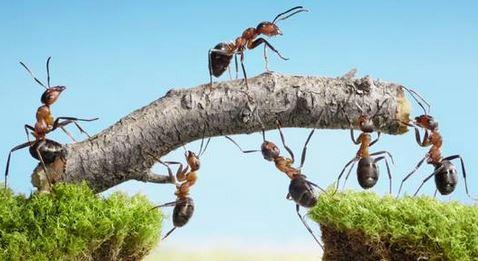 anternet algoritmo delle formiche