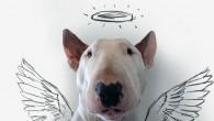 Rafael Mantesso ha pubblicato su Instagram una nuova serie d'immagini che ama mettere in scena, quelle di Jmmy Choo la sua adorabile Bull Terrier protagonista in una varietà di pose stravaganti, incastonate in divertenti tratti di penna intelligenti (clicca l'immagine per vedere altre foto). L'eccellente progetto d'arte è iniziato nel […]