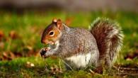 Tre allevatori tedeschi tra il 2011 e il 2013 sono morti dopo aver contratto un nuovo ceppo del virus dagli scoiattoli tenuti in allevamento. I tre uomini di età compresa tra i 62 e 72 anni, sono deceduti per encefalite(provoca brividi, febbre, confusione, debolezza e difficoltà a camminare) nel lander […]