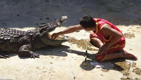 Samphran Crocodile Farm