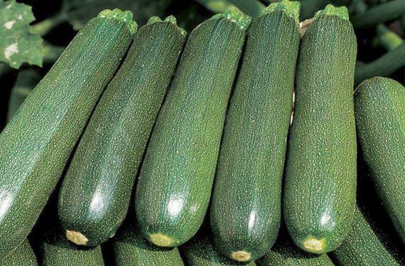 zucchine cucurbitacina