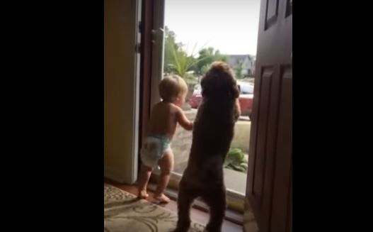 Bambino e cane arrivo papà