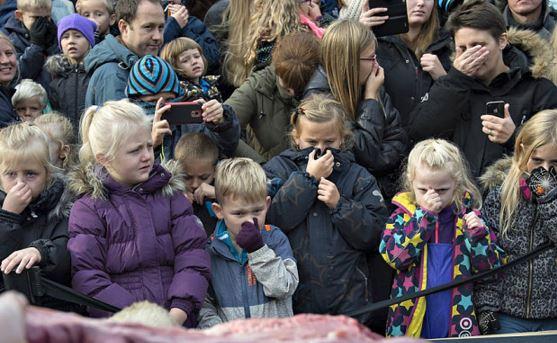 Leone dissezionato zoo danese