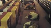 In Grecia, molte persone abbandonano i loro amati animali domestici perché non possono permettersi di mantenerli, per loro fortuna ogni giorno, un caffè in Greciaalle 3 del mattino chiude le sue porte ai clienti per aprirle ai cani randagi. Ciò significa che i canini senzatetto (dall'inizio dell'anno in tutta la […]