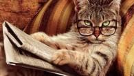 E' un fatto noto che i gatti possono essere animali molto schizzinosi, alcuni amano altri animali domestici, come cani e anche gli uccelli, altri gatti non sopportano la presenza di loro simili. I gatti sono molto territoriali, molto più dei cani. L'aggressione territoriale si ha quando un gatto ritiene che […]