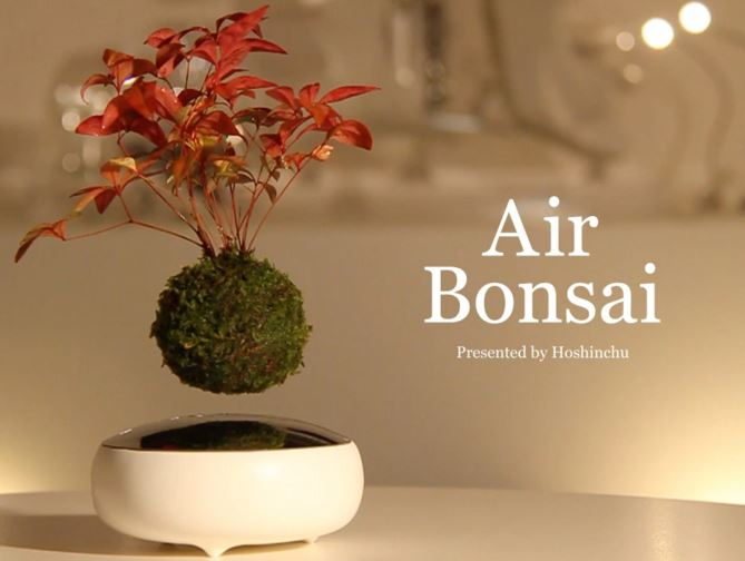 Air Bonsai fluttuante