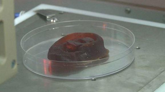 Cellule cartilagine coltivate in laboratorio