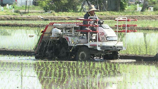 Macchine per piantare piantine di riso