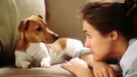 """Chiunque abbia sperimentato l'adozione di un cucciolo sa che può essere un duro impegno, lo sanno bene le persone che spesso fanno riferimento ai loro animali domestici come a """"bambini pelosi"""", considerando quanta attenzionerichiedono subito dopo essere stati adottati. I cuccioli hanno bisogno di tempo per sistemarsi nella nuova casa […]"""