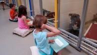 Un rifugio per animali ha lanciato un programma educativo, invita i bambini a leggere per i cani in attesa di adozione. Humane Society of Missouri ha detto che il programma oltre a migliorare nei bambini la capacità di lettura a voce alta, aiuta i cani a sentirsi più a loro […]