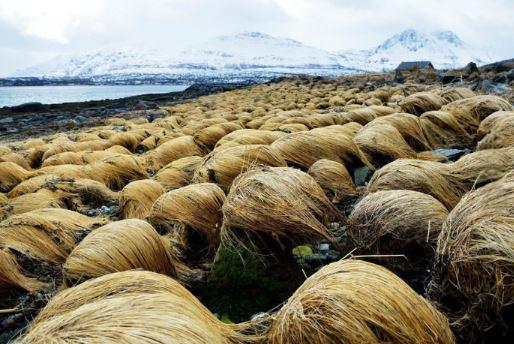 Isola parrucche di Donald Trump
