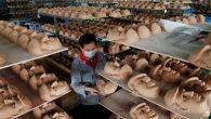 """In Cina una fabbrica cinese nonostante gli attacchi di Donald Trump nella campagna presidenziale degli Stati Uniti (ha detto che la Cina ha intrapreso una """"guerra economica"""" contro gli Stati Uniti, utilizza furbe pratiche commerciali per rubare posti di lavoro agli americani), sta scommettendo sulla sua vittoria, e mira a […]"""