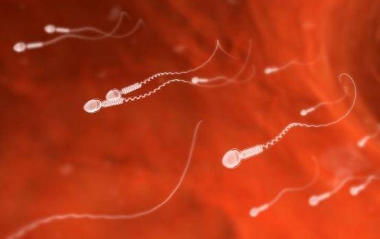 Sperma da cellule della pelle umana