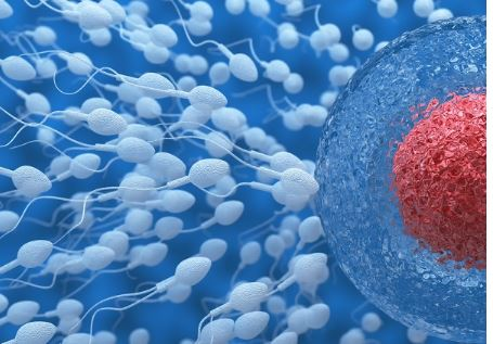 Spermatozoi test con cellulare